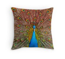 male Peacock with spread feathers  Throw Pillow