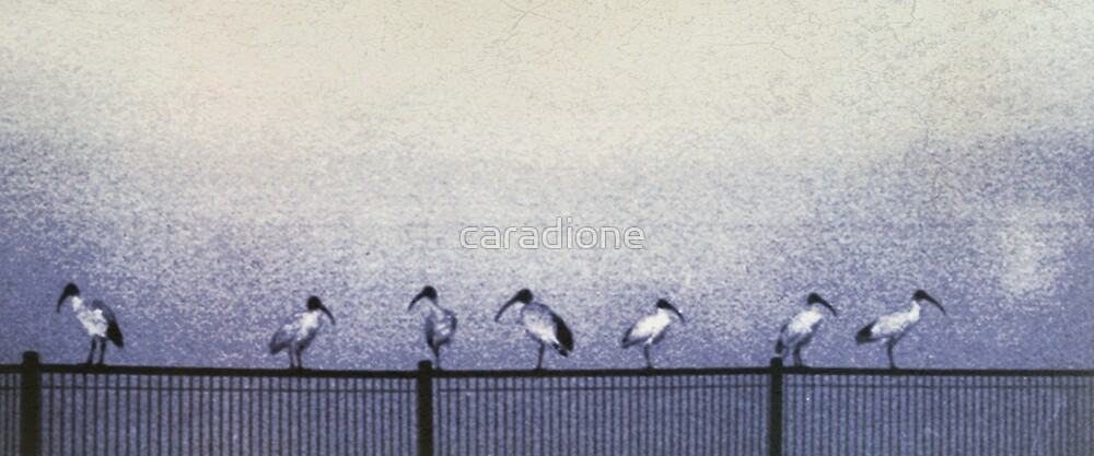 morning meeting... by caradione