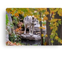 Timber Wolf by Pond Metal Print