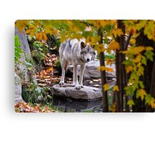 Timber Wolf by Pond Canvas Print