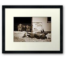 dumb horse Framed Print