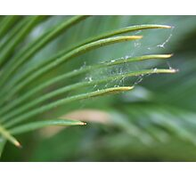 Spiderwick Photographic Print