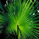 Palm Frond Pattern plants larry149 by Larry149
