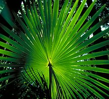 Palm Frond Pattern plants larry149 by Larry149