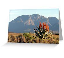 Aloe Ferox Greeting Card