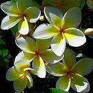 The Beautiful Frangipani... by GerryMac