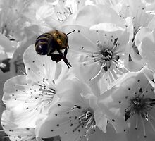 Bee by Stuart Kincheloe