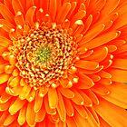 Hearts Of Flowers by Lenny La Rue, IPA