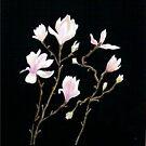 Magnolia Soulangeana 'Alexandrina' by Alexart