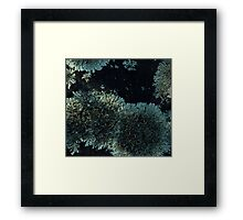 0123 - HDR Panorama - Lichen 3 Framed Print