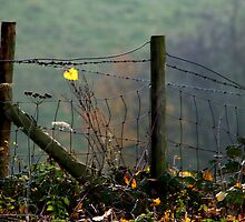 A jewel in the fence by Bev Evans