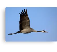 Common crane (Grus grus) also known as the Eurasian Crane Canvas Print