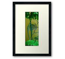Anyone for chameleon yoga... Framed Print