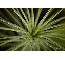 Night Spikes Photographic Print
