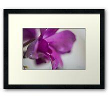Orchid leave Framed Print