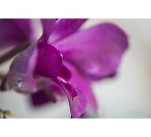 Orchid leave Photographic Print