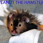 Peanut The Hamster by abaustin1