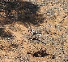Camoflage Dog by Splogy