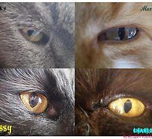 ..Our Kitties.. by elizabethrose05