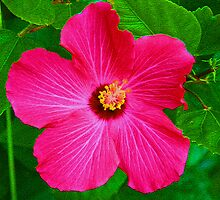 hot pink flower by carolyn taylor