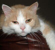 lazy cat by carolyn taylor