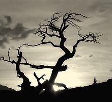 Burmis Tree by Vickie Emms