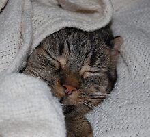 Sleeping Cutie by Heather Shalley
