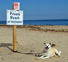 Private Beach by lookherelucy