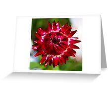 Floating Strawflower Greeting Card