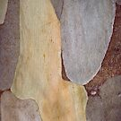 Tree Bark Patterns by Tom Vaughan