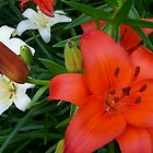 Lovely Lillies by tserio