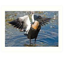 Duck Wings Art Print