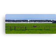 Cows - fences, trees and only 1 gate. Canvas Print