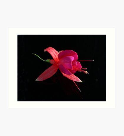 Fuchsia IX Art Print