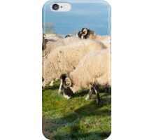 Chilly Sheep iPhone Case/Skin