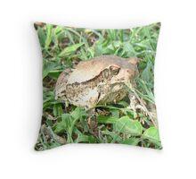An African Frog - Rana Temporaria Throw Pillow