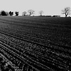 Ploughed field by Phil Whiting