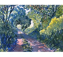 """""""Hockney's Tunnel of Trees"""" Photographic Print"""