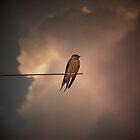 Evening Light by Martie Venter