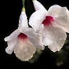 It Rained Last Night by heatherfriedman