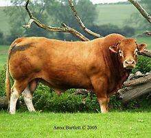 Bull by SilkyAlien