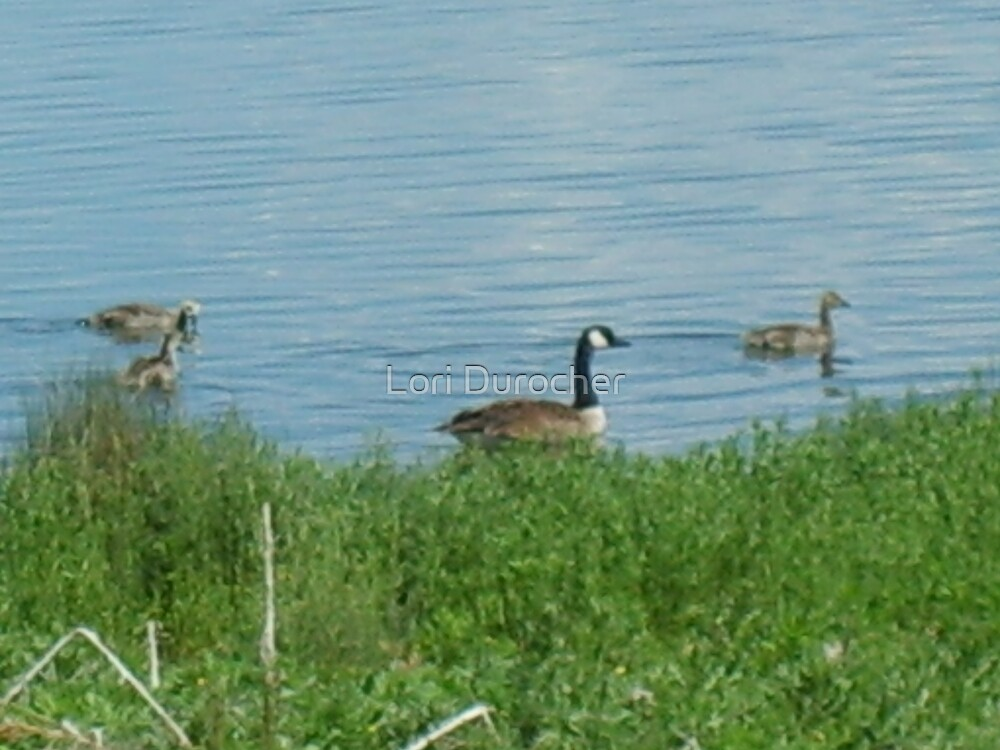Geese by Lori Durocher