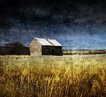 Borrowed Sky by Tony Lomas