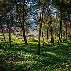 Naftali Trees by Neta Bartal