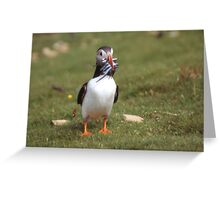 Puffin 4 Greeting Card