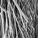 Roots! by John  Kapusta