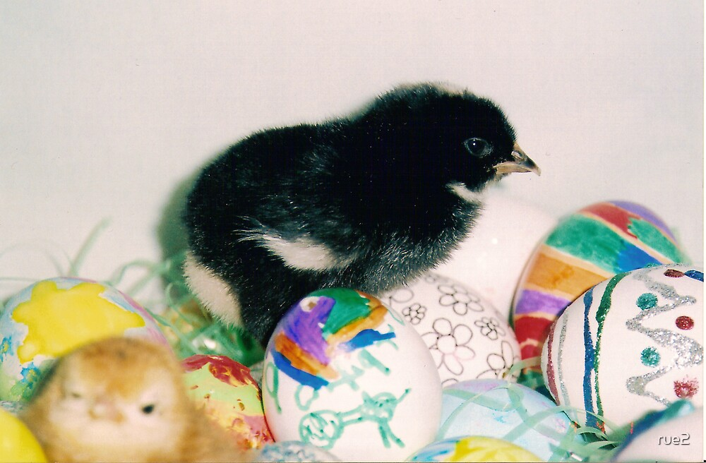 black chick with eggs by rue2