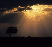 Breakthrough in the Serengeti by bertspix