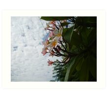 Frangipanis and Sky Art Print