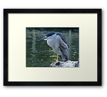 Night Heron Framed Print